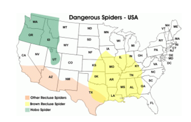 Most Essential Home Remedies For Preppers Survival Life - Map of poisonous spiders in the us