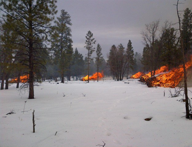 Start a Small Forest Fire | Cold Weather Survival Tips