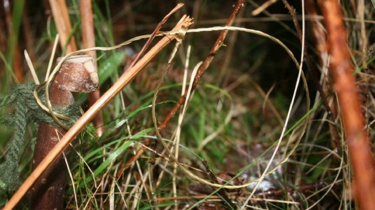 5 Sneaky Survival Snare Traps to Keep You Alive