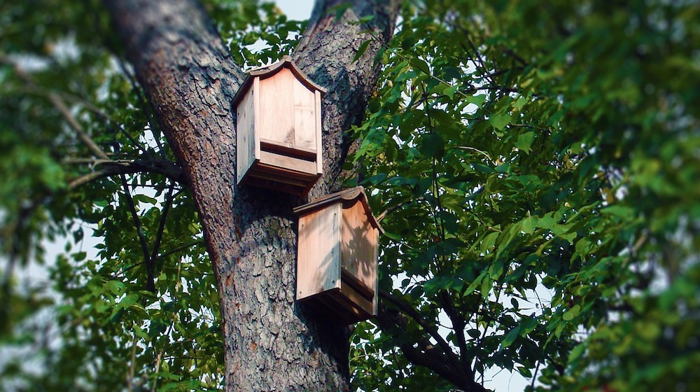 Why Bat Houses are Good