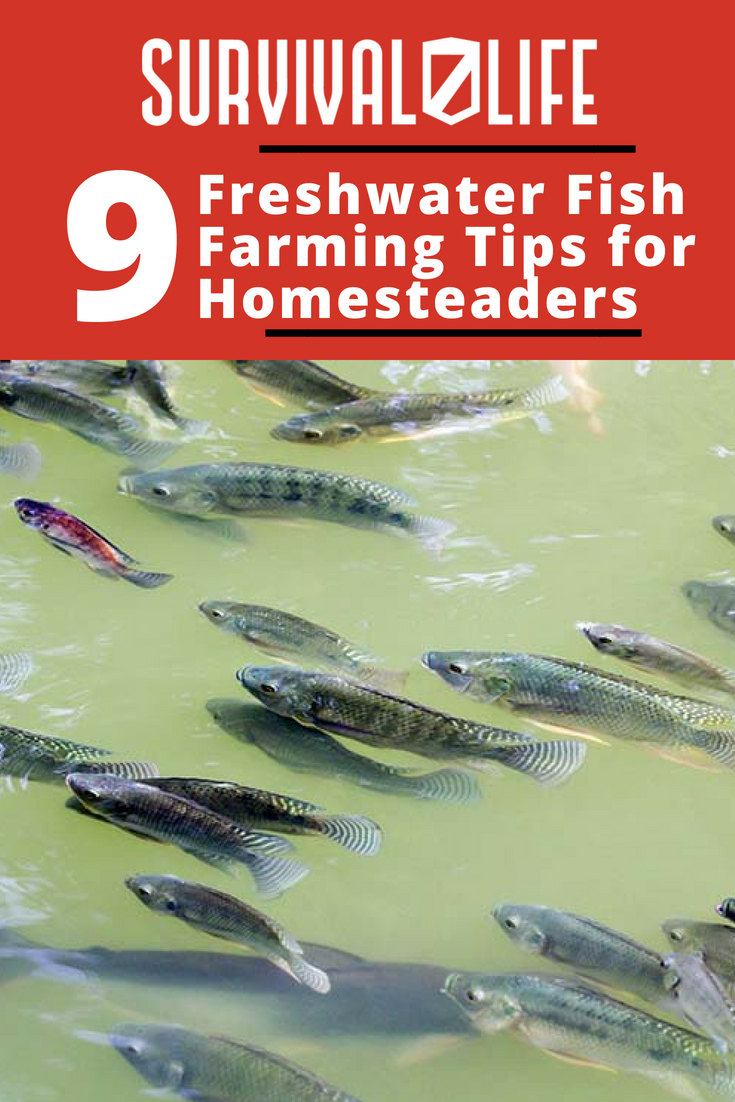 Check out 9 Freshwater Fish Farming Tips for Homesteaders at https://survivallife.com/freshwater-fish-farming-tips/