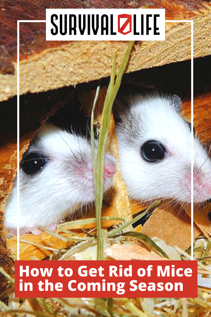 Check out How to Get Rid of Mice in the Coming Season at https://survivallife.com/get-rid-mice/