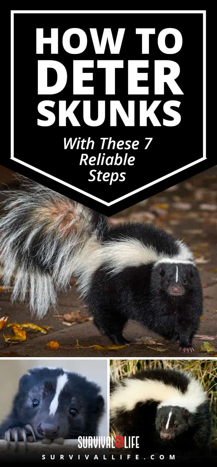 Placard | Steps to Deter Skunks | How To Deter Skunks With These 7 Reliable Steps