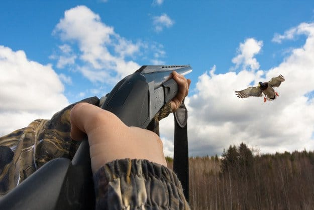 Duck Hunting in Florida | Florida Hunting Laws and Regulations