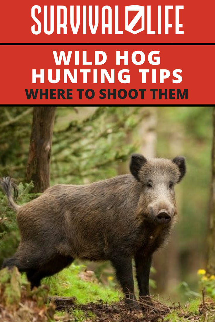 Check out Wild Hog Hunting Tips: Where To Shoot Them at https://survivallife.com/wild-hog-hunting-tips-shoot/