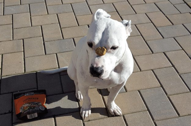10 Reason Every Prepper Should Own A Pit Bull