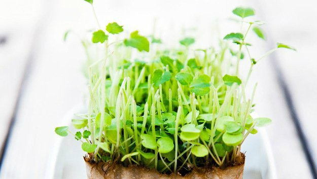 Grow Microgreens | 10 Gardening Tips and Tricks Everyone Should Know