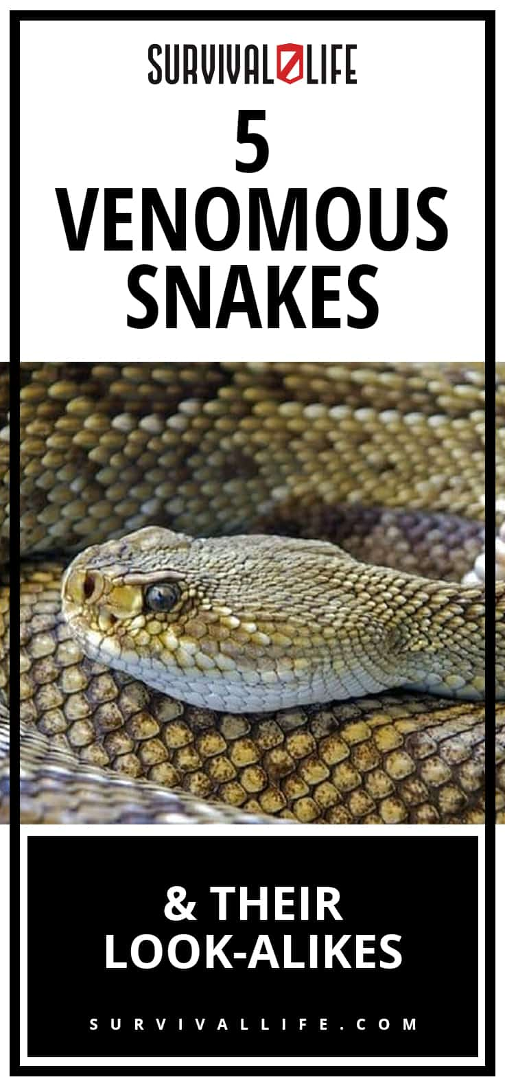 Venomous Snakes and Their Look-Alikes | https://survivallife.com/venomous-snakes-look-alikes/