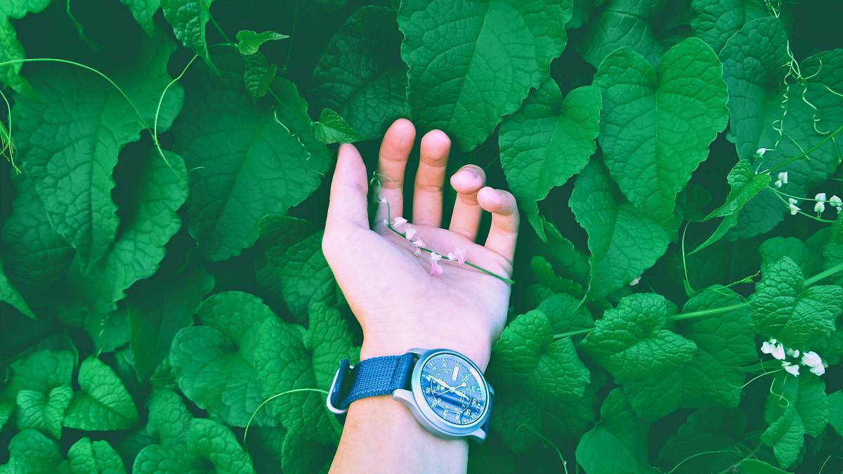 A person wearing wristwatch with nature background | Ways To Find True North Without A Compass