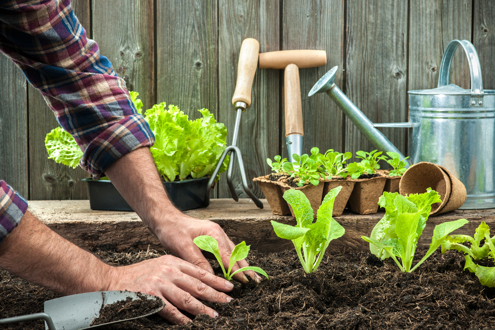 Feature | Americans Take Up Gardening as Food Shortages Continue