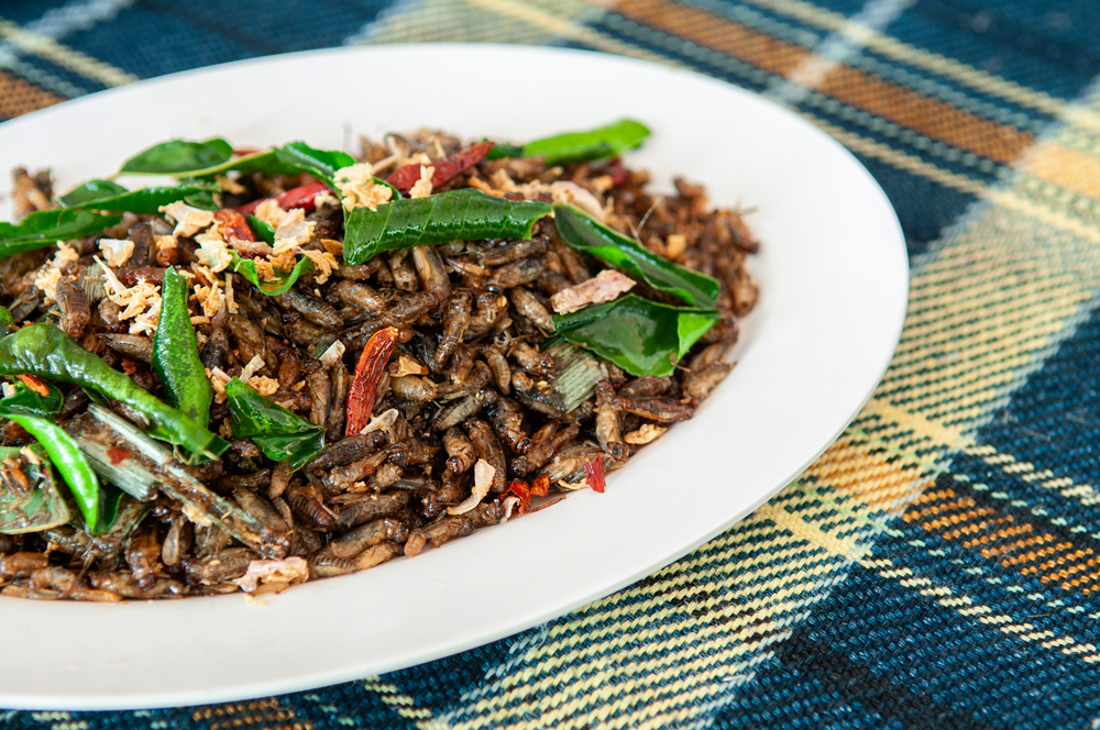 Insect Recipes | Survival Foods: Bugs, Insects, and Related Recipes